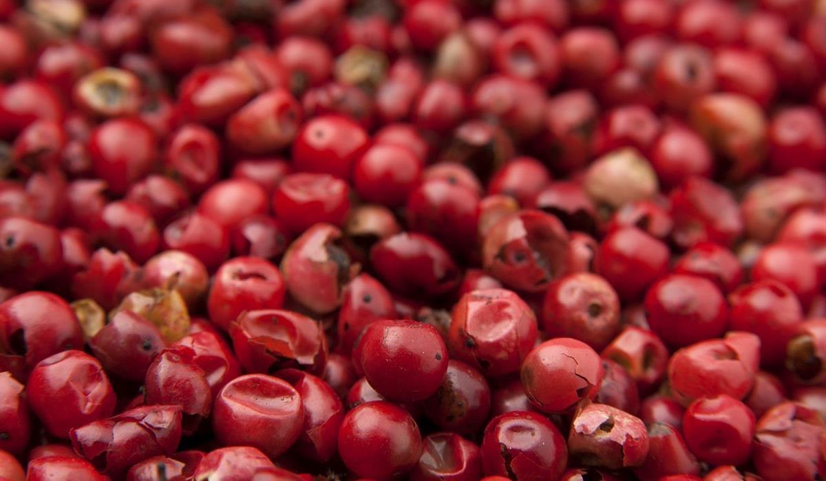 Jagody Goji – składniki odżywcze